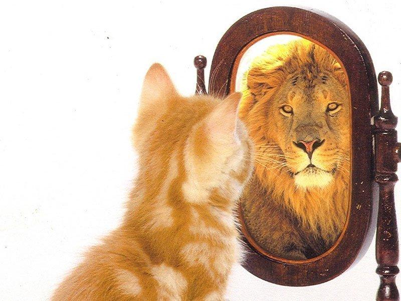 Une des principales sources de réussite scolaires au moment de l'adolescence est la confiance en soi.